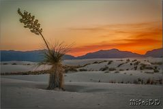 Sonnenuntergang in White Sands...