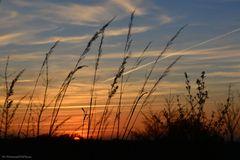 Sonnenuntergang mit Gräsern