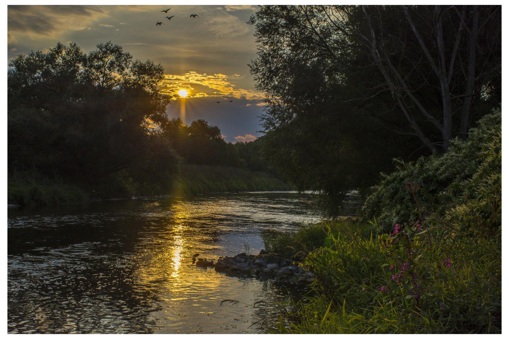 Sonnenuntergang mit Graugänsen an der Werra