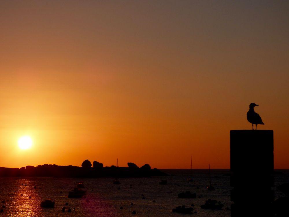 Sonnenuntergang mit Möwe