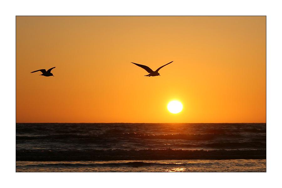 Sonnenuntergang mit Möwen #1
