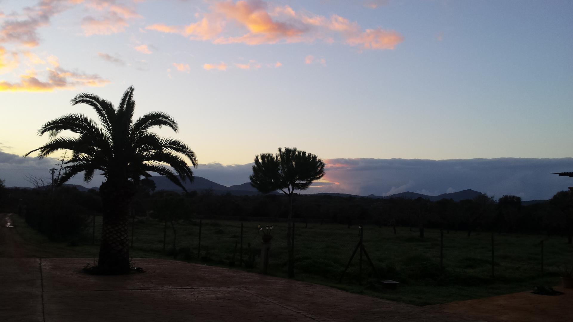 Sonnenuntergang mit Palmen Sicht.