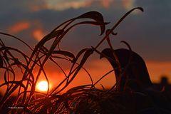 Sonnenuntergang mit Raubvogel
