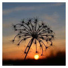 Sonnenuntergang mit Rispe