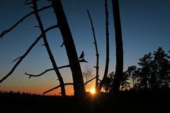 Sonnenuntergang -mit-Vogel
