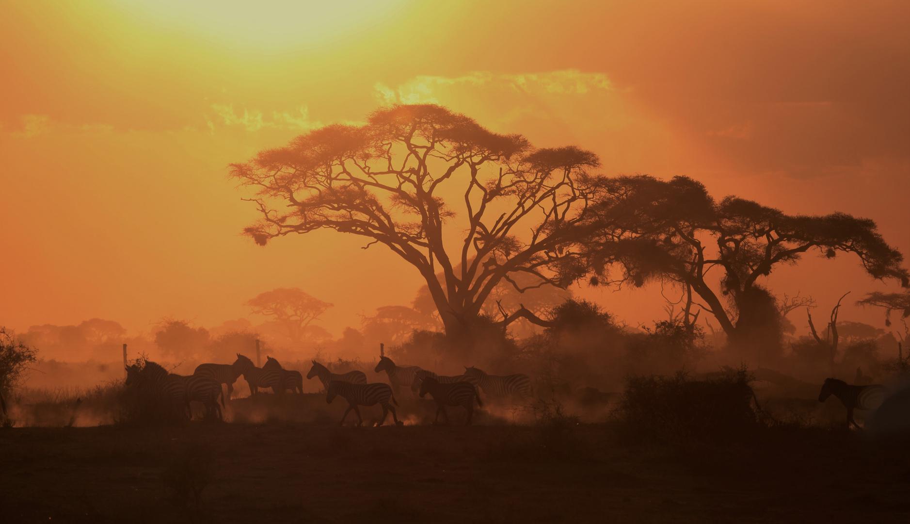 Sonnenuntergang mit Zebras , Ambroseli NP