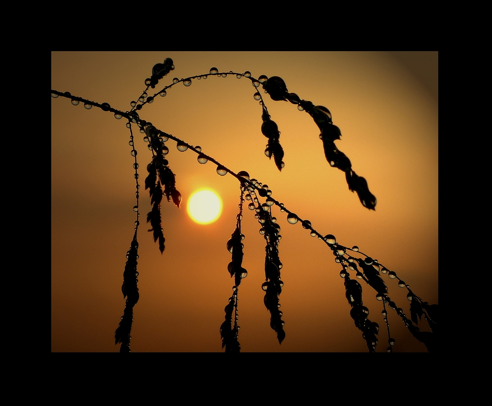 Sonnenuntergang Perlen I