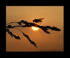 Sonnenuntergang Perlen II