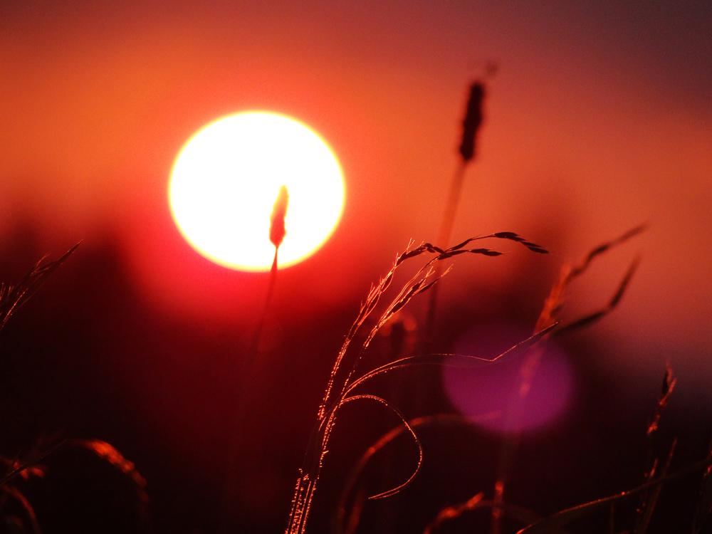 Sonnenuntergang, Schweineburg
