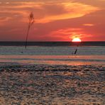 Sonnenuntergang über dem Watt...