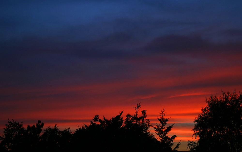 Sonnenuntergang über den Wipfeln im heimischen Garten
