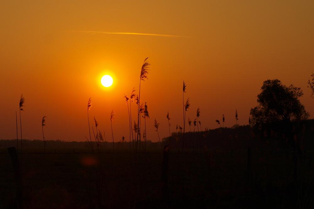Sonnenuntergang über der Elbaue