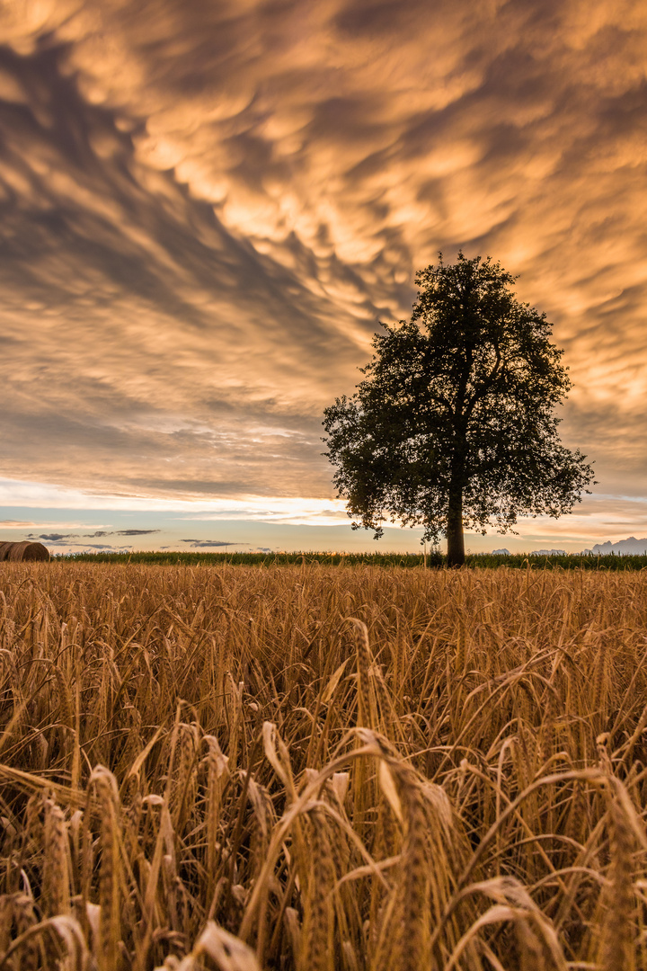 Sonnenuntergang über Hechingen.