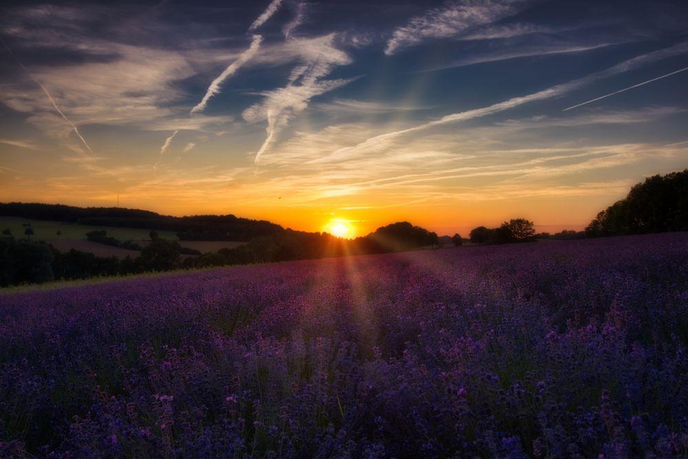 Sonnenuntergang über Lavendel