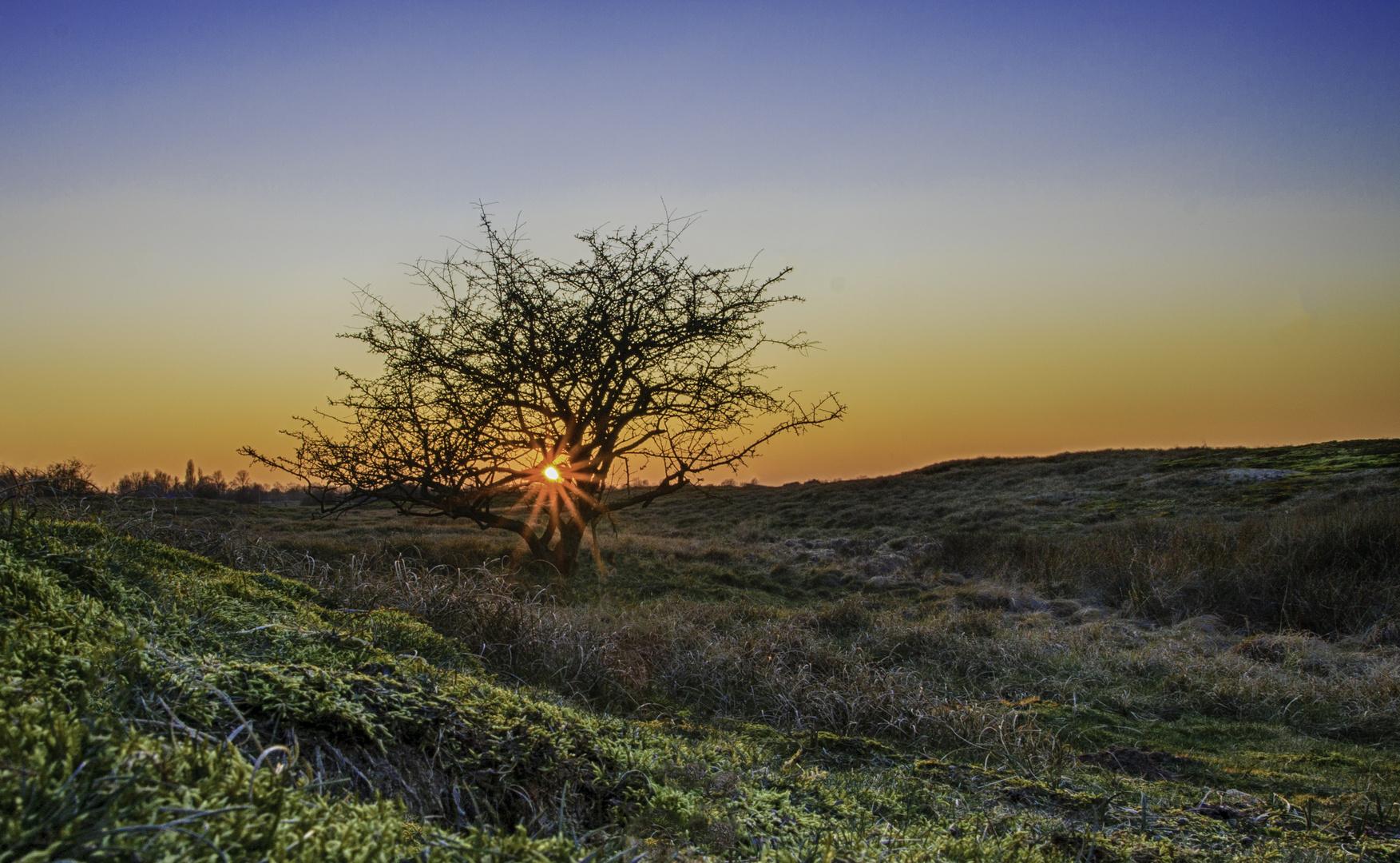 Sonnenuntergang Wisseler Dünen
