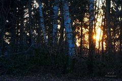 Sonnenuntergang zwischen den Bäumen