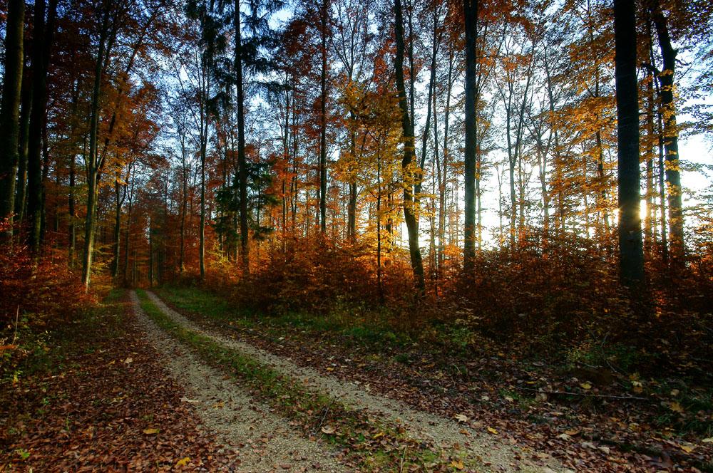Sonnenuntergangs  im schwäbischen Wald.-Sunset in the Schwabian Forest.