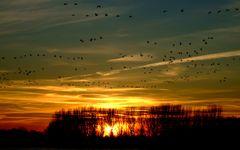 Sonnenuntergangsgänsehimmel