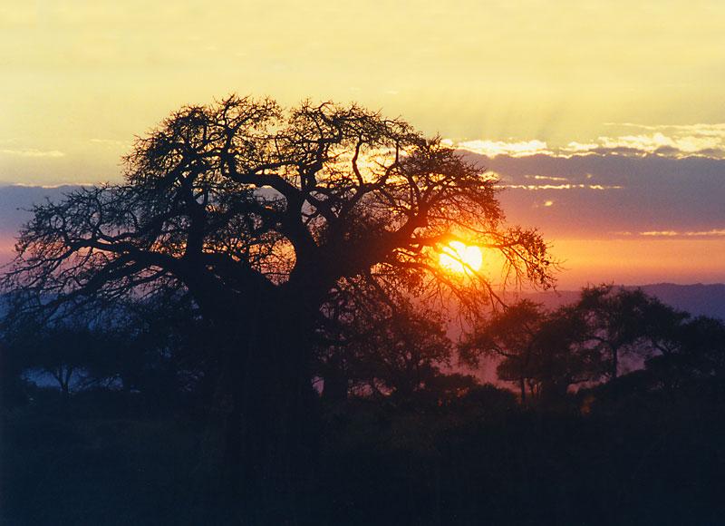 Sonnenuntergsang in Tansania