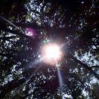Sonnestrahlen