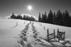 Sonne,Winterbäume,Schneeschuhspuren,so ist Winter