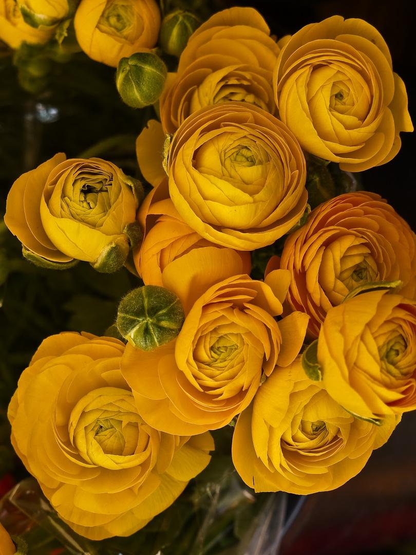 sonnige blütenfarben ...