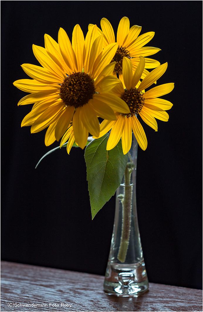 sonnige blumengr e foto bild pflanzen bl ten sonnenblumen bilder auf fotocommunity. Black Bedroom Furniture Sets. Home Design Ideas