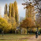 Sonnige Herbststimmung im November am Rheinufer in Mainz-Kastel