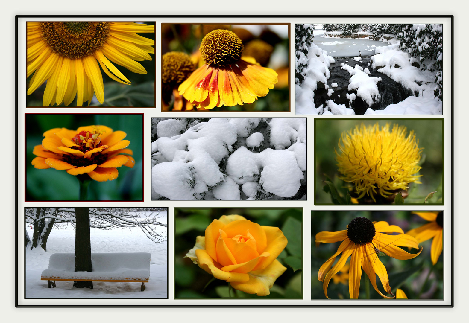 Sonnige (wärmende) Farben im kalten Winter