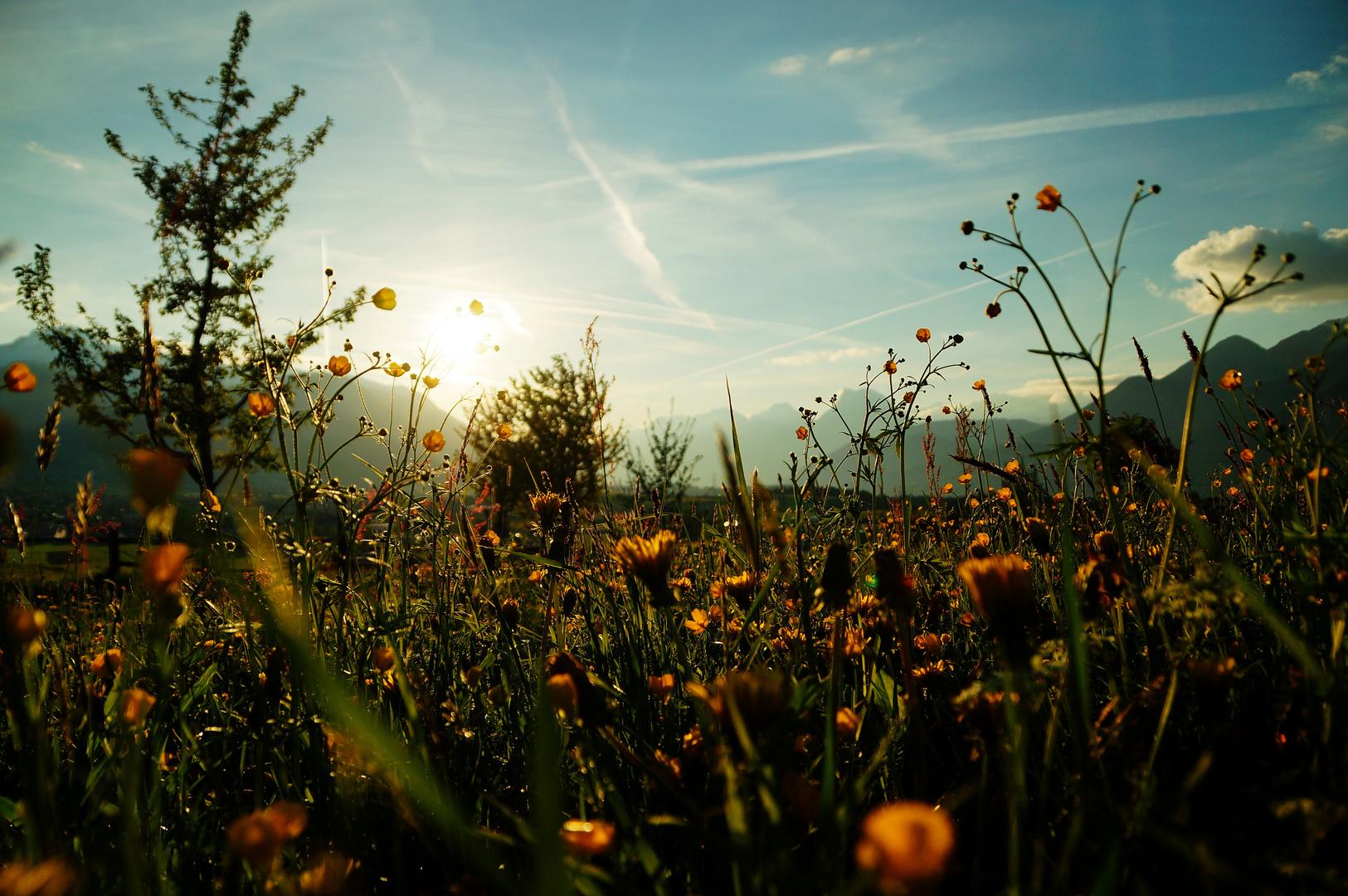 sonniger Frühlingsabend