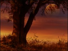 Sonniger Herbst..
