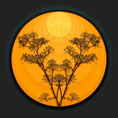 Sonniger Herbst   /   Autunno soleggiato