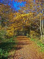 Sonniger Herbstspaziergang