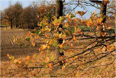 Sonniger Herbsttag in meiner Heimat