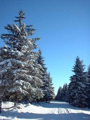 Sonniger Wintertag