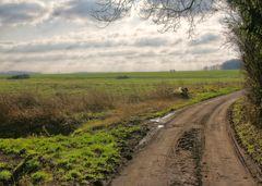 Sonntag-Sonnen-Spaziergang VI