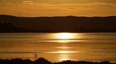 Sonntagabend, der weiße Reiher am Ufer der goldenen Lagune