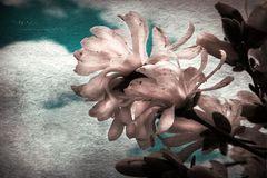 Sonntags-Blüte