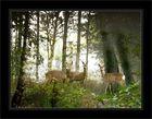 Sonntags im Wald