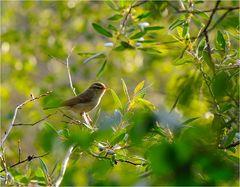 Sonntags-Rätselvogel