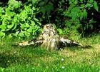 Sonntagsbesuch in Sonnenscheins Garten
