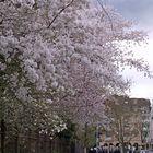 Sonntagsblütenregen