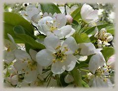 Sonntagsblumengruß ...