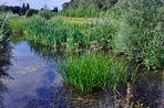 Sonntagspaziergang - ein Biotop im Rheinpark Neuss