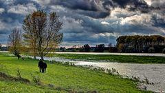 Sonntagsspaziergang am Rhein und ein alter Eimer