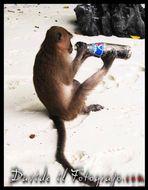 Sono Assetata di Pepsi..