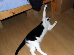 Sooo groß war die Maus... :D