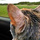Sophie im Auto