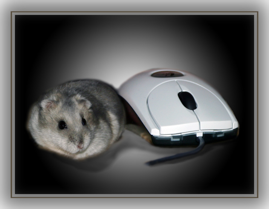 Sophie --- mouse ----