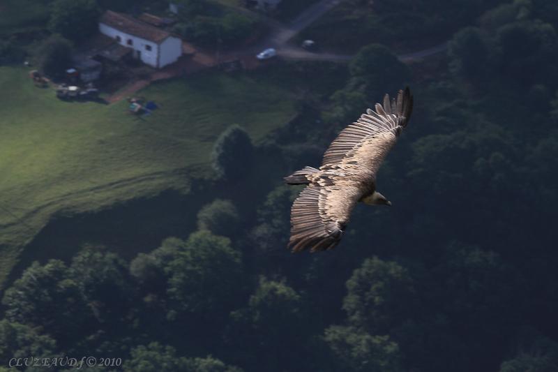 sortie vautours 02